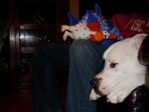 Stuffie Stole Magoo!!!!!