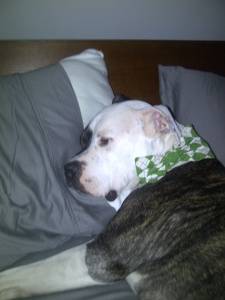 What, Mom, you want me to wake up? Yeah, I don't think so. I  finally got this pillow that you were hogging all night.